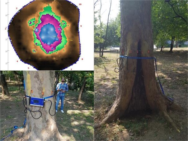 tomograf2 Tomograf pentru arbori