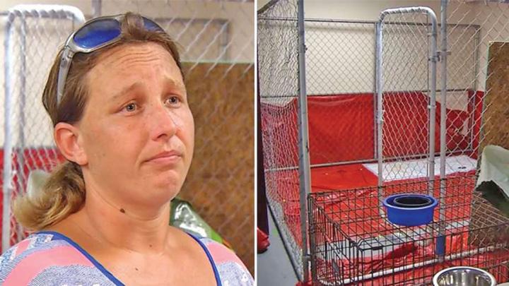 femeie Arestata pentru ca a salvat animale de uragan