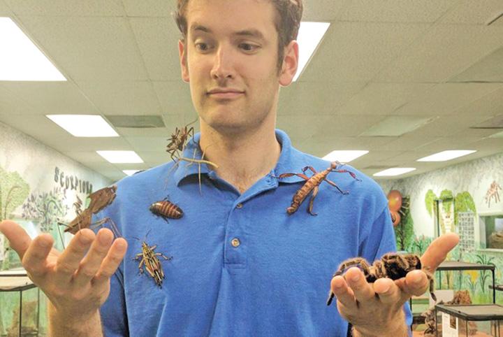 insecte 7000 de insecte vii, furate dintr un muzeu