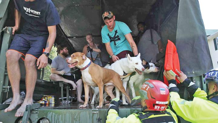 uragan Arestata pentru ca a salvat animale de uragan