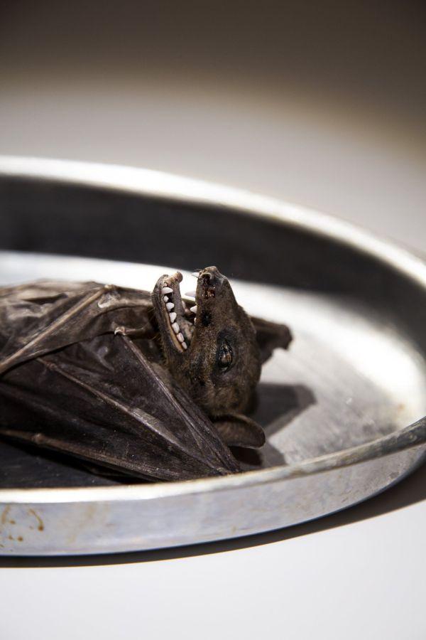 liliac Muzeul mancarurilor dezgustatoare
