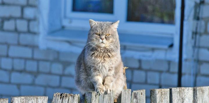 pisici mare Pisicile din New York bat palma cu sobolanii