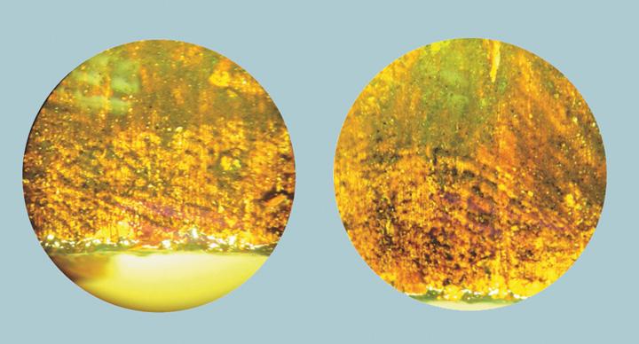 amprente 2 Tablou cu amprentele lui Rembrandt