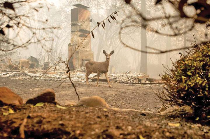foc4 California, un paradis devenit iad