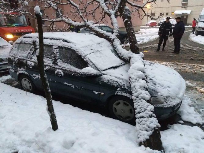 copac masina 667x500 Urmarile iernii: locuinte in bezna, copaci cazutisub greutatea zapezii