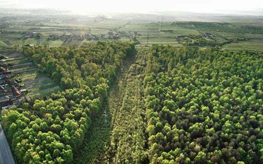 perdele forestiere A fost adoptat proiectul de lege cu privire la înființarea perdelelor forestiere de protecție