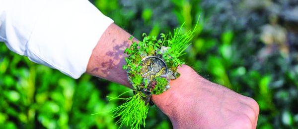 ceas Ceas din plante si licheni