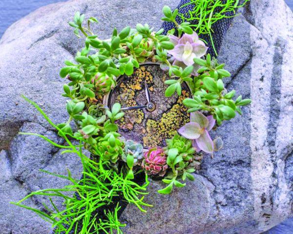 ceas1 Ceas din plante si licheni
