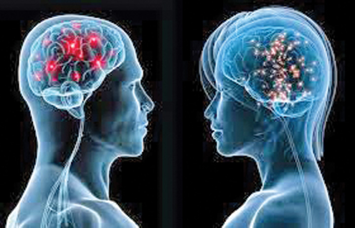 creiere Diferenta intre creierul femeilor si cel al barbatilor