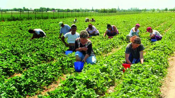 gricultori tineri Fermierii pot angaja tineri pe banii UE