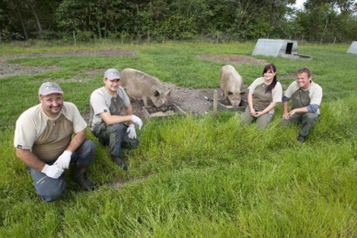 danezi Incredibil! De ce își mută străinii porcii în România