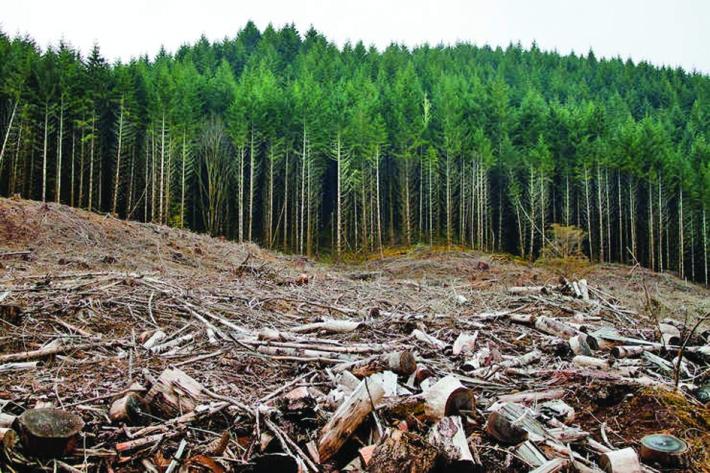 padure Pădurile, fără apărare. Guvernul desființează Garda Forestieră Națională